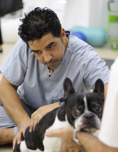 Plan de salud para perros senior