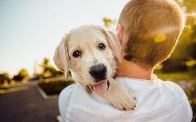 Primeros pasos en el cuidado de un cachorro