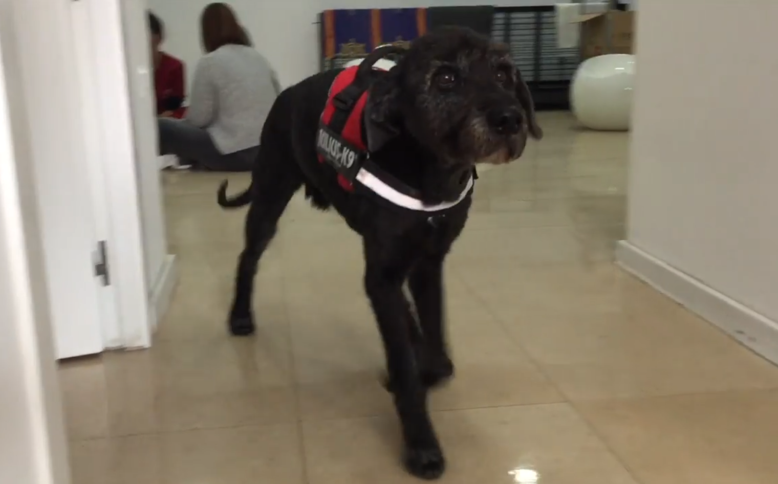 Neo, despues de superar la tetraplejia canina